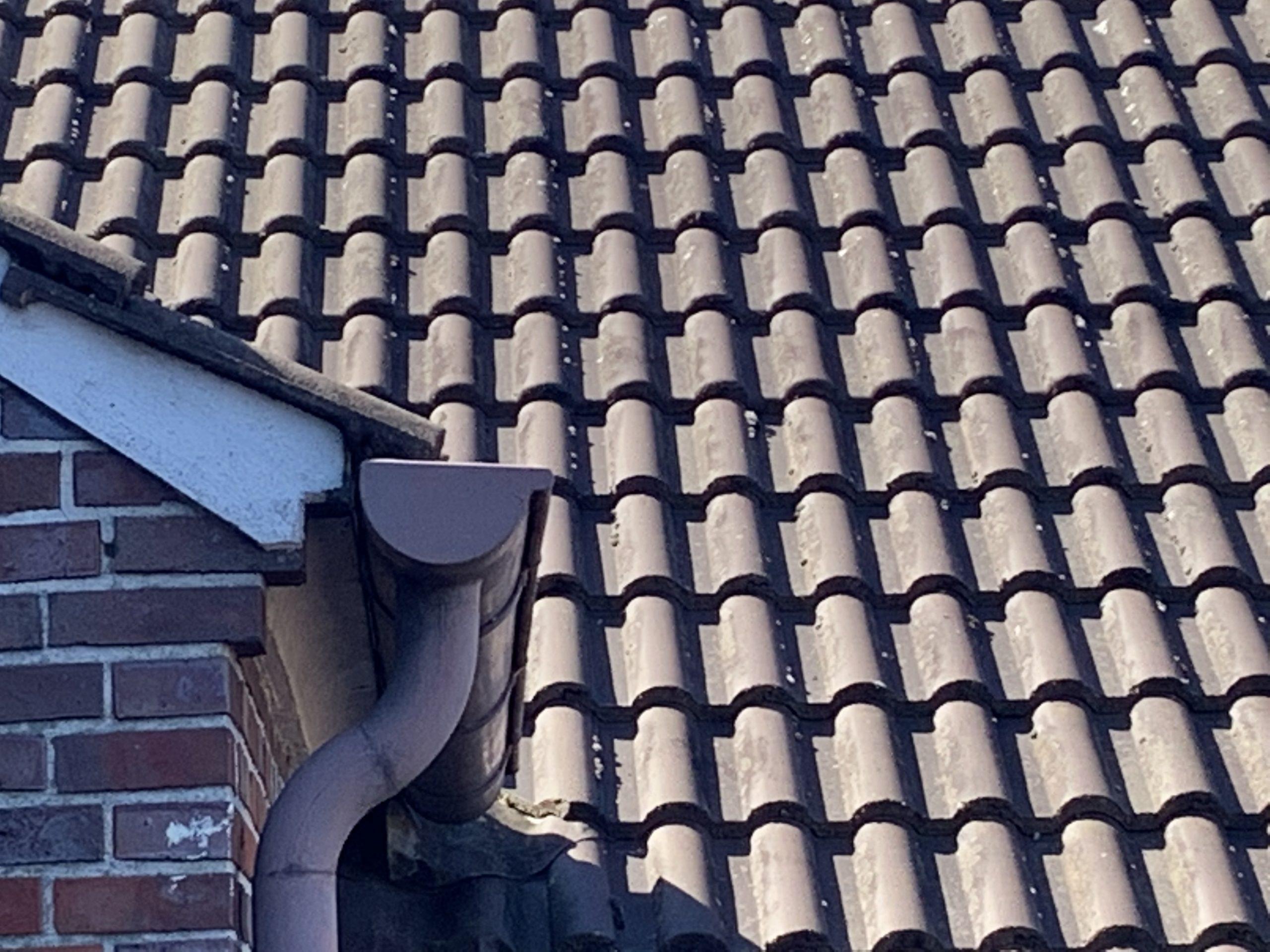 Kurz erklärt: Die Dachrinnenreinigung beim Bauverein