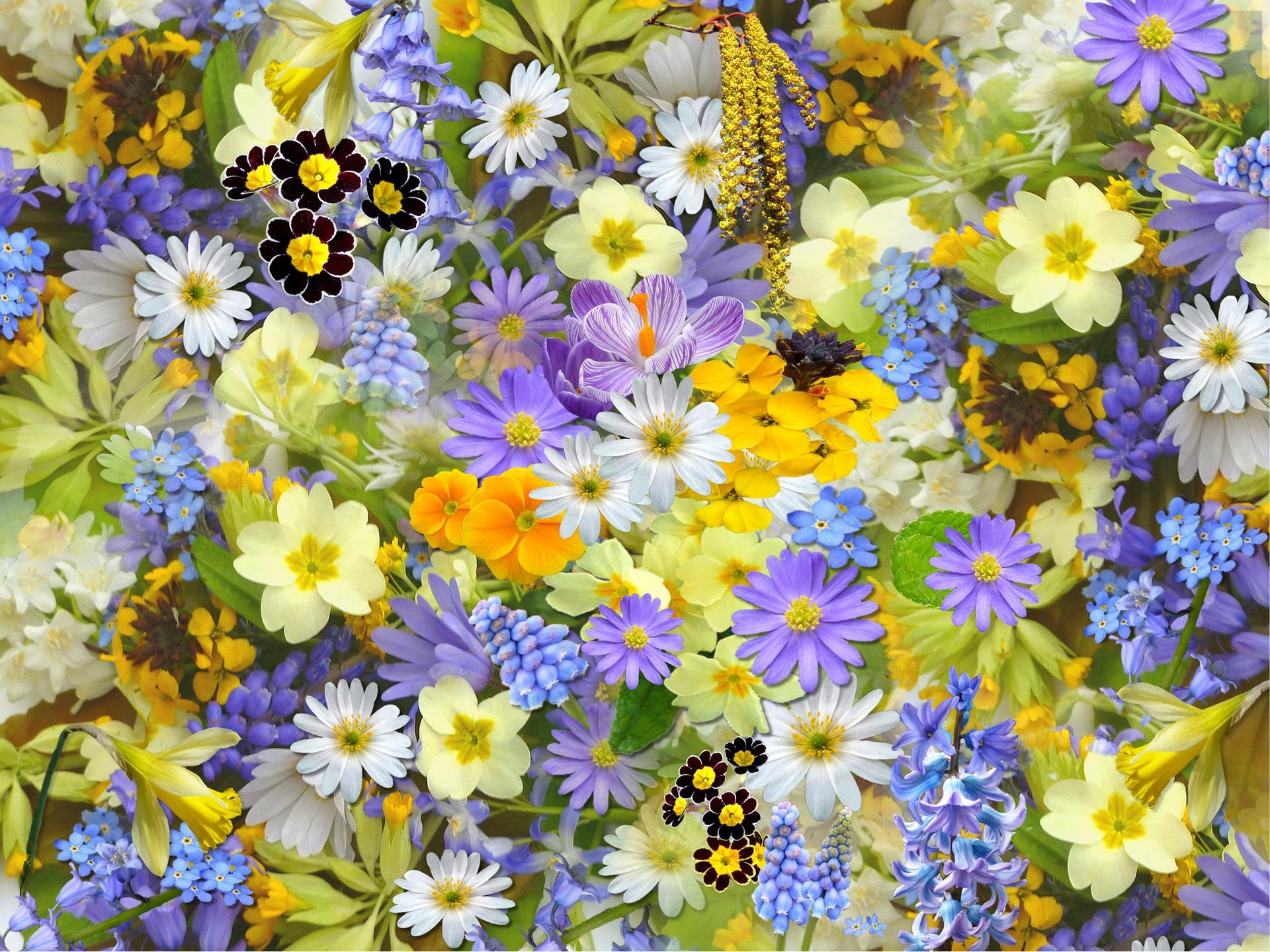 Balkon und Terrasse: 10 Tipps für eine farbenfrohe Blumenpracht