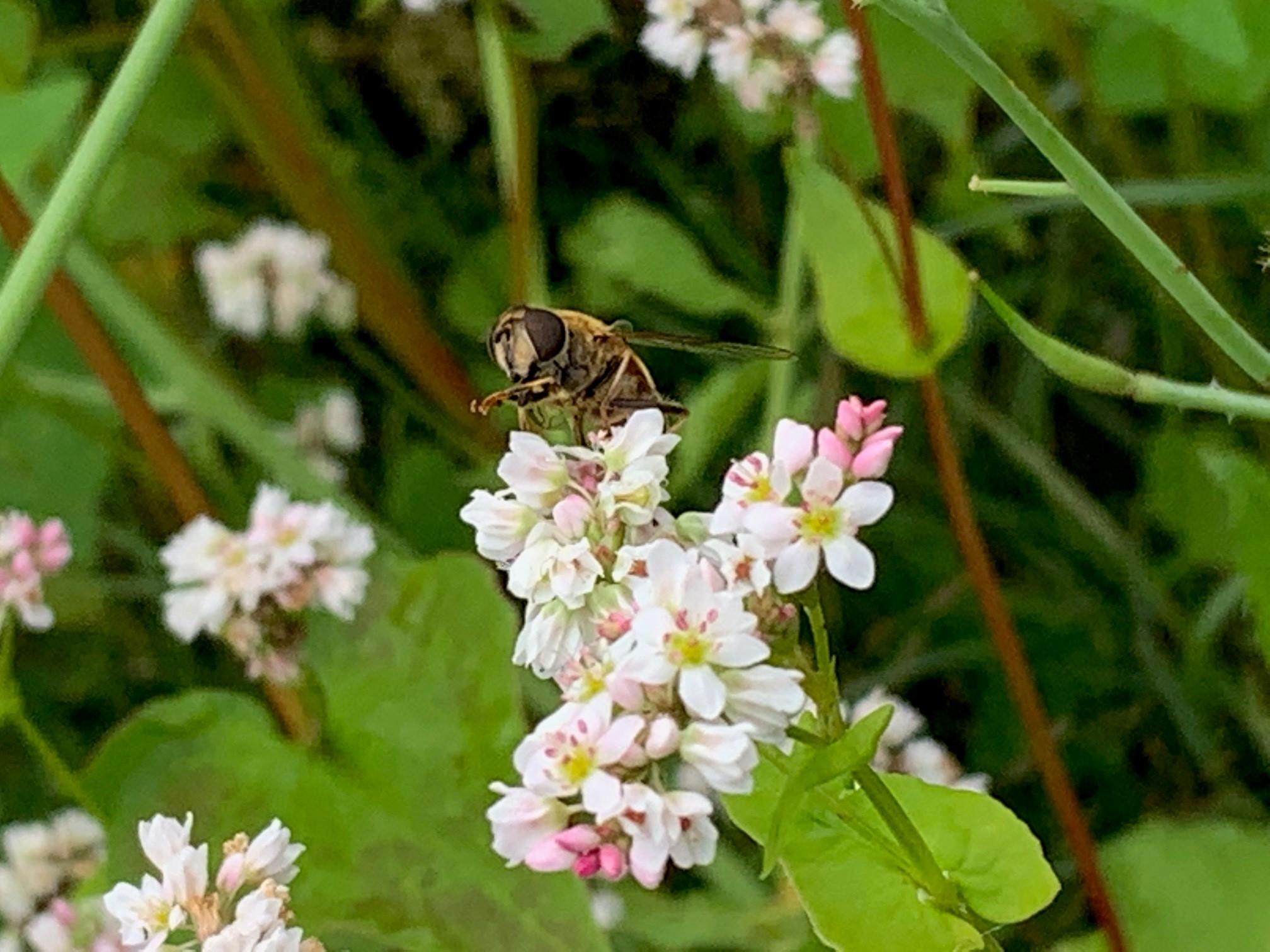 Bauverein: Mit Blühwiesen den Insekten helfen